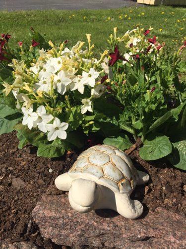 Sköldpadda bland blommorna