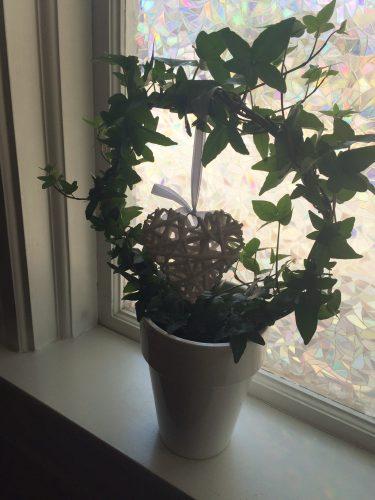 Ny blomma