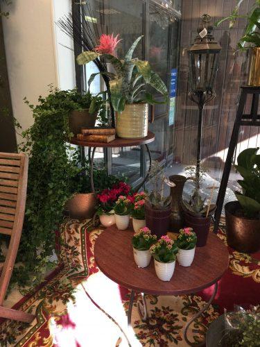 Blommor Löfgrens