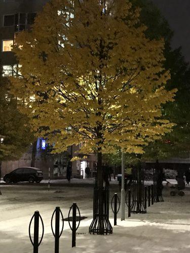 Vinterträd Stockholm